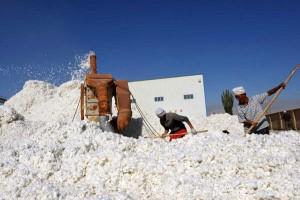 江苏启动棉花目标价格改革补贴工作